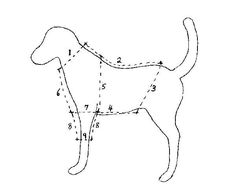 Free Online Dog Clothes Patterns measurements