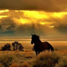 horses what beautiful creatures