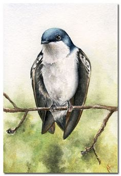 From the Studio of Madelaine: Captured Moment (Finished) - Bird #4