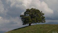 Participez à l'inventaire des arbres remarquables Mes loisirs - ECOCITOYEN GRENOBLE