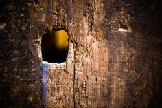 Cómo envejecer la superficie de la textura de madera de pino de nueva