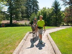 eselreiten-4-3 Park, Sidewalk, Horseback Riding, Side Walkway, Parks, Walkway, Walkways, Pavement