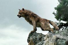 Jacob in Wolf form Twilight Saga