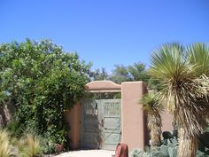 Corrales residence - inside entry gate, Thompson Yucca, Desert Prickly Pear, Trumpet Vine, Feather Grass (QUERCUS, 1996)
