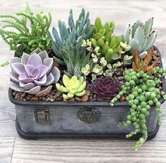 40 Amazing Succulents Garden Decor Ideas Succulents are perfect plants for dry gardens and are easy to root and grow. Once you learn how easy it […]***These succulents are tender soft succulents- meaning they will not tolerate frost. In fact, most Succulent Centerpieces, Succulent Gifts, Succulent Gardening, Succulent Arrangements, Succulent Terrarium, Container Gardening, Succulents In Containers, Cacti And Succulents, Planting Succulents