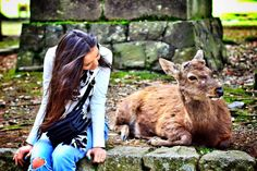 So many freely roaming deers in nara Park! They are considered to be the messengers of gods in Shinto religion and they are a real symbol of the city. They have even been designated as a naturale treasure! Just give them some deer crackers and they will be your best friends in Nara!