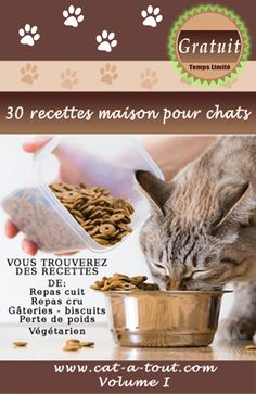 Discover recipes, home ideas, style inspiration and other ideas to try. Pension Pour Chat, Croquettes Chat, Cat Health, Health Care, Purple Iris, Cat Breeds, Pet Toys, Pet Care, Dog Bowls