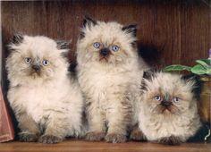 Three little kittens wallpaper | AllWallpaper.in #15120 | PC | en  AllWallpaper.in2337 × 1684Search by image  Three little kittens wallpaper