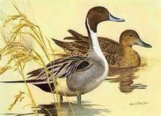 Ken Carlson - Artist > Fowl-Waterfowl - Ken Carlson