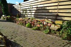 1 year of wall-gardening. #gardening #garden #gardens #DIY #landscaping #home #horticulture #flowers #gardenchat #roses #nature
