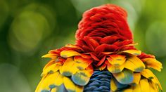 Guanacaste Province, Paradise On Earth, Close Up Photos, Bird Species, Holiday Destinations, Scarlet, Costa Rica, Birds, Nature