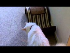 This is Pet Interviews- Talking Dog, Cat, and Bird. I love PetsAddLife on YouTube! So funny.