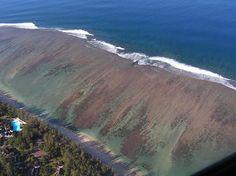 La Reunion Island   Reunion Island Hotels
