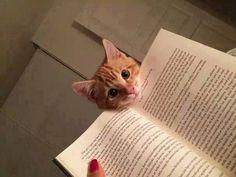 Il gattino s'affaccia sul libro