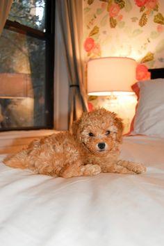 College Prep: Meet Teddy!