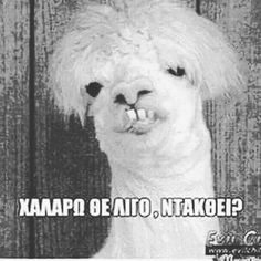 Greek Memes, Funny Greek Quotes, Funny Qoutes, Happy Animals, Funny Animals, Funny Images, Funny Pictures, Sisters Of Mercy, Funny Vines