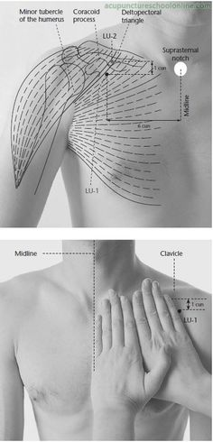 LU-1 Central Residence ZHONGFU - Acupuncture Points -1 More