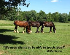 The Shire mares of Kohler Farms! Be Inspired! Shire Horse, Mother Teresa, Farms, Horses, Puppies, Inspired, Animals, Homesteads, Cubs