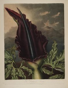 n268_w1150 by BioDivLibrary, via Flickr