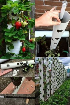Erdbeeren pflanzen in DIY Containers – so geht's! creative craft idea with pvc pipes for diy contain Plant Strawberries in DIY Containers - Here& how! Planting strawberries in small spaces Strawberry Garden, Strawberry Plants, Fruit Garden, How To Plant Strawberries, Hydroponic Gardening, Hydroponics, Gardening Tips, Organic Gardening, Container Gardening Vegetables