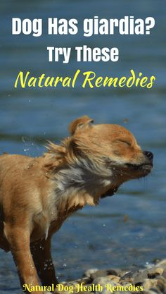 Natural Dog Remedies For Reverse Sneezing