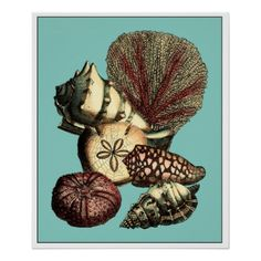 #fishing - #Turquoise Shell and Red Coral Collection Poster