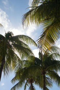Sunshine Palm Trees Photo / Digital Download / Summer Photograph / Palm Trees Poster / Palm Trees Canva / Summer Canva / Printable Photo / Etsy Download   Blog: Karateandcaviar.com