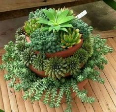 Horticulture Strategies For Fun And Functional Purposes - Special Garden Design Succulents In Containers, Cacti And Succulents, Planting Succulents, Cactus Plants, Garden Plants, Indoor Plants, Planting Flowers, Propagating Succulents, Succulent Gardening