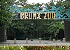 Bronx Zoo!  I was only 4 when my mom took me here in 1964.  My grandmother in Okinawa has the black and white pictures in her family album