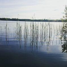 """""""Talviturkki"""" tuli uitua pois. Vesi 17. #hirvijärvi"""