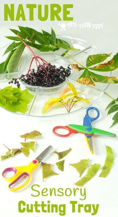 A Sensory Nature Cutting Tray is a fun activity for kids to engage with nature, stimulate the senses and develop fine motor scissor and sorting skills too.