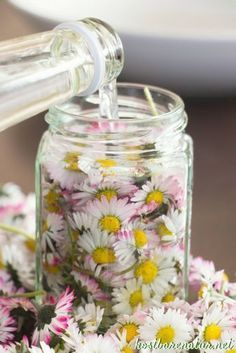 Daisy tincture - against acne, blackheads and impure skin- Gänseblümchen-Tinktur – gegen Akne, Mitesser und unreine Haut The daisy contains many valuable ingredients that you can preserve in a tincture and use all year round. Diy Beauty, Beauty Hacks, Beauty Tips, Beauty Room, Cleanser, Mason Jars, Diy And Crafts, Natural Hair Styles, Natural Beauty