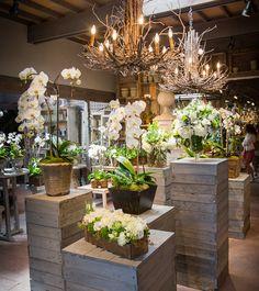 Garden, Home and Party: Celebrating Spring w Roger's Gardens Display Design, Store Design, Garden Shop, Home And Garden, Garden Center Displays, Flower Shop Design, Flower Shop Decor, Palette Deco, Fleur Design
