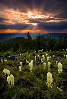 Mount Hood Wilderness, Oregon.