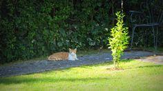 Los gatos son un clásico en Internet, de hecho hay quien dice que ya no quedan gatos que subir a la red... pero se equivocan. Los villanos contribuimos al cat-trend enseñándoos a nuestro pequeño vecino felino que ha venido, una mañana más, a reposar a la sombra de nuestro jardín villano. Desde la ventana vigilamos atentos sus divertidos movimientos admirando su tranquilo mañaneo animal. Con él os deseamos que paséis este último lunes de agosto de una forma muy gatuna: panza arriba y al sol.
