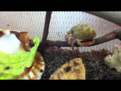 Hermit Crab Care: Tank Setup (Save Money With This Guide)
