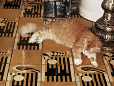 Floor tile in a bathroom in Hemingway's house in Key West, FL - with one of the famous 6-toed cats.