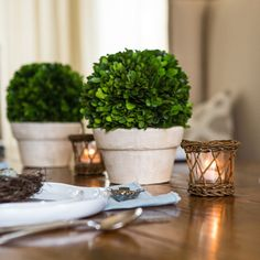 Preserved Boxwood Ball in a Pot makes a great centerpiece that you can leave out all the time! www.linenandboxwoods.com