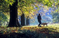 Best friends enjoy an autumn day out in Tring park, Tring, Hertfordshire, England, UK.  http://www.woodlandtrust.org.uk/visiting-woods/wood/4675/tring-park/?utm_source=pinterest&utm_medium=social&utm_campaign=wt_2014