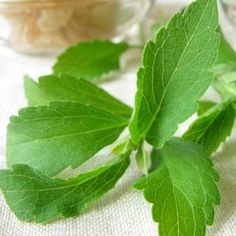 Pestovanie - stévia cukrová   Peknetelo.eu Stevia, Plant Leaves, Plants, Grasses, Plant, Planets