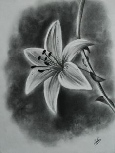 white lily flower drawings - Google Search