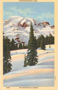 Mount Rainier, Spring, Rainier National Park - Linen Postcard - Unused (CC)