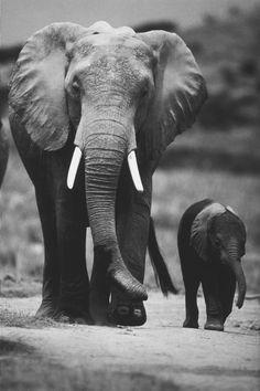 Elephants' best shots | Elephants