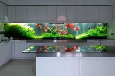 Modern Aquarium Design For Modern Home Aquarium Design, Wall Aquarium, Discus Aquarium, Nature Aquarium, Aquarium Fish Tank, Freshwater Aquarium, Fish Tank Wall, Aquariums Super, Amazing Aquariums