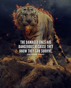 Realness been through shit my whole life but i always come back stronger feeling emotional depressed mentalhealth mentalhealthawareness needs to be better in this world Tiger Quotes, Lion Quotes, Wolf Quotes, Animal Quotes, Quotable Quotes, Wisdom Quotes, Me Quotes, Francis Chan, Motivation Success
