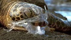 The animals that are being harmed by plastic bags.