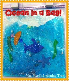 Mrs. Byrd's Learning Tree: Ocean in a Bag!