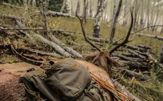 Image result for camo net stealth camp