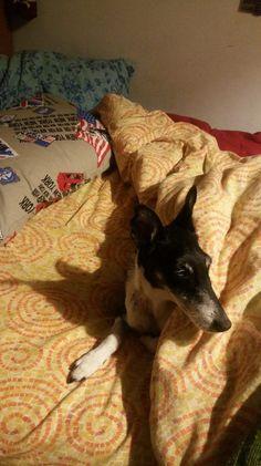 Dove dormire in Scozia: Mini guida ricerca alloggio - 50sfumaturediviaggio Glamping, Boston Terrier, Mini, Dogs, Animals, Boston Terriers, Animales, Animaux, Go Glamping