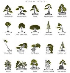 Top Bonsai Tree Care Products: As you may have gathered bonsai trees must be trained, shaped and pruned regularly. Choosing the necessary bonsai tools is no Bonsai Tree Care, Bonsai Tree Types, Indoor Bonsai Tree, Bonsai Plants, Bonsai Garden, Garden Plants, House Plants, Bonsai Pruning, Plantas Bonsai